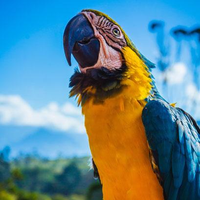Perles rares Voyage Colombie