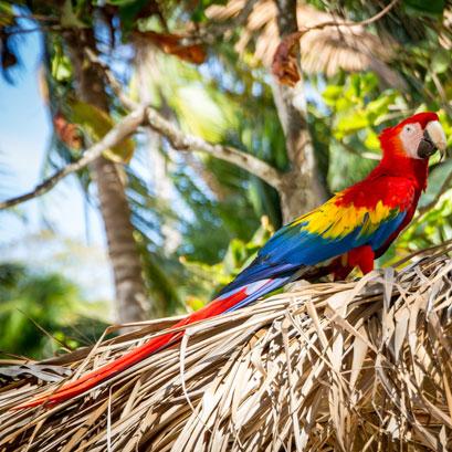 Perles rares Voyage Costa Rica