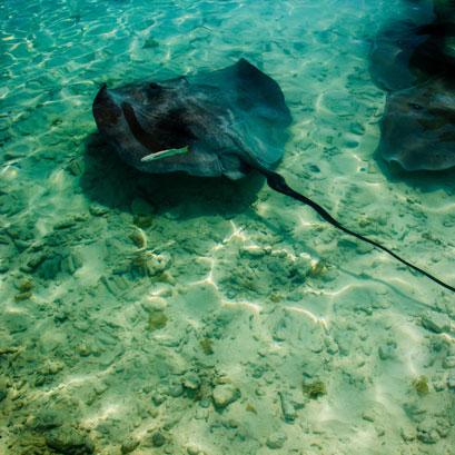 Perles rares Voyage Polynésie